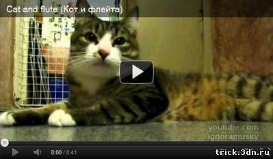 Кот и флейта