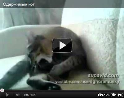 Одержимый кот
