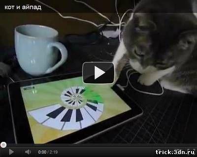 Кот и айпад