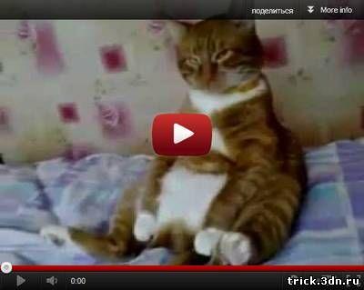 Подборка приколов про кошек